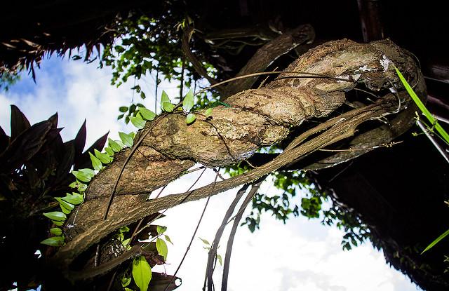 Ayahuasca Guide – Misunderstood sacred plant medicine