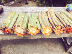 San Pedro (Huachuma) Guide – Misunderstood sacred plant medicine